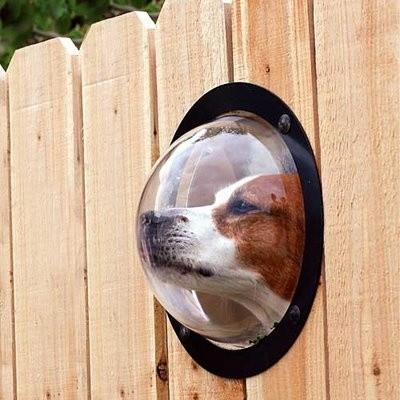 Dog Peek - modern - pet accessories - - by Opulent Items