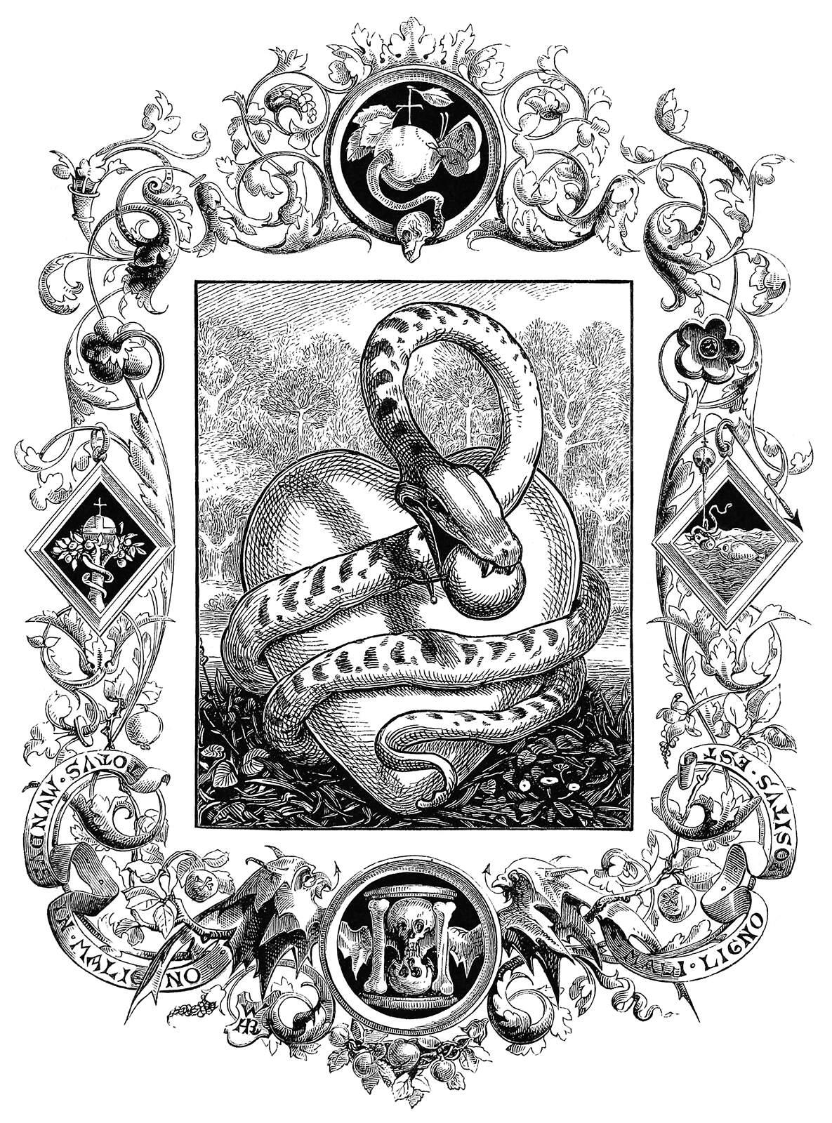 serpent-1600.jpg (1185×1600)