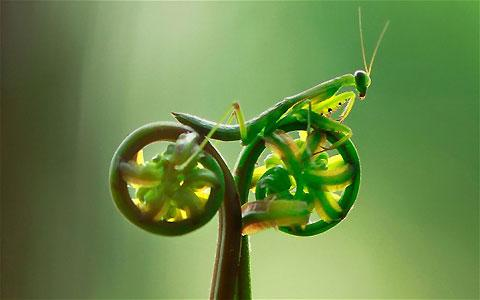 Incredible photo of a Praying Mantis riding a bike — Lost At E Minor: For creative people