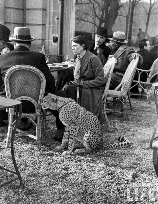 Wild Pets, 1891-1971 | Retronaut