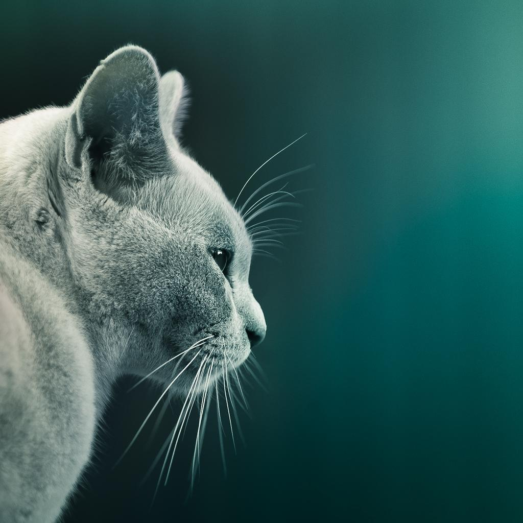 All sizes   Cat   Flickr - Photo Sharing!