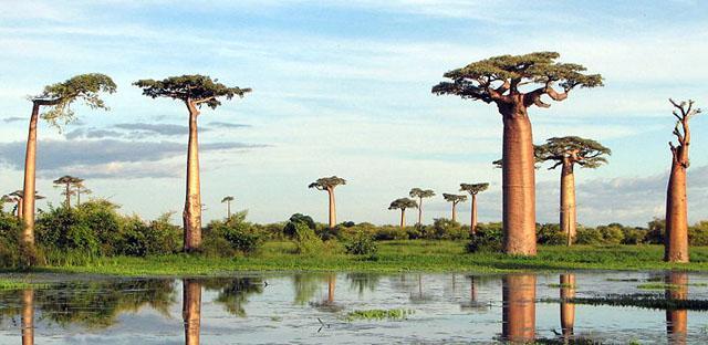 Top 10 Bizarre Tree Pictures   Top 10 Pictures