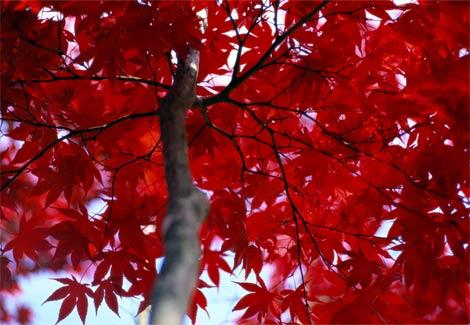 red-1.jpg (JPEG Image, 470×325 pixels)