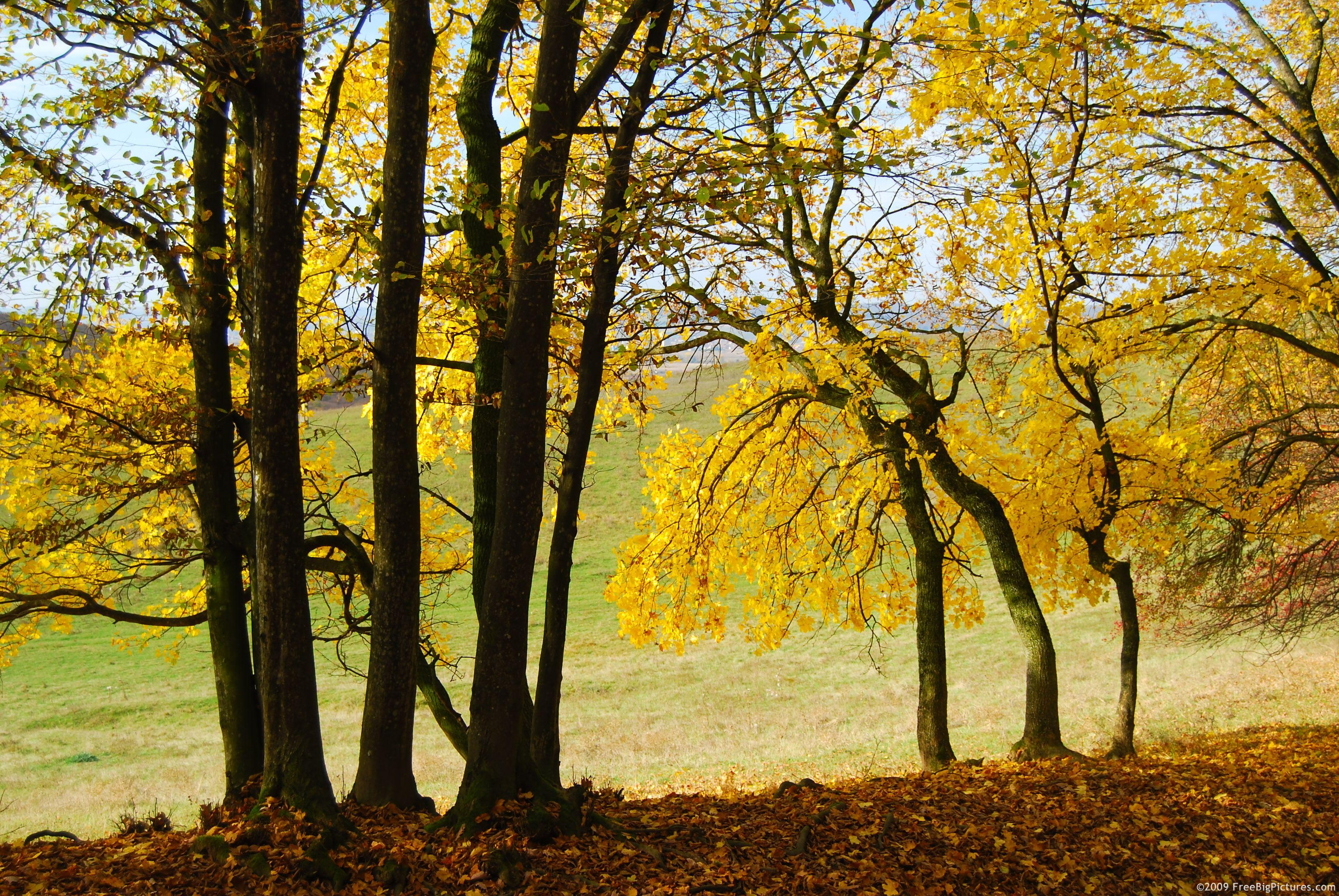 fall-yellow-trees.jpg (JPEG Image, 3436 × 2300 pixels) - Scaled (34%)