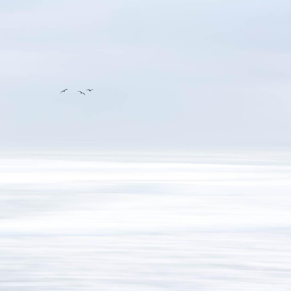 All sizes | Three Birds V | Flickr - Photo Sharing!