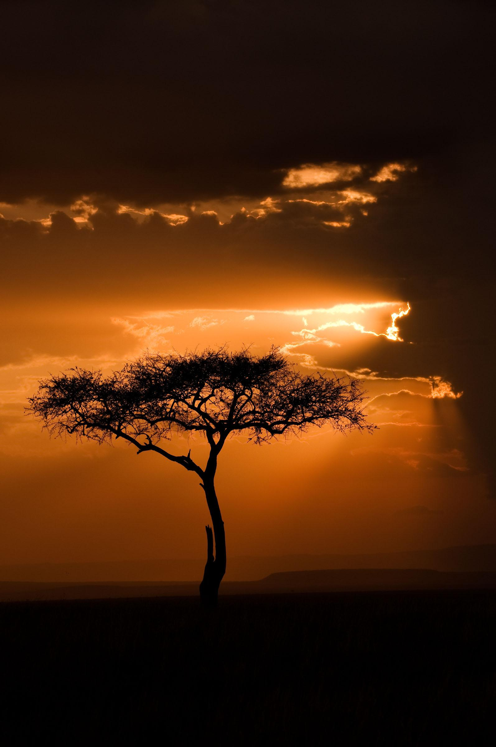 Todos os tamanhos | KENYA - MASAI MARA SUNSETS | Flickr – Compartilhamento de fotos!