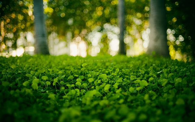 Sono Luminus | Flickr - Fotosharing!