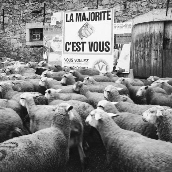 tarpley-201-la-majorite-c-est-vous-moutons.jpg (Image JPEG, 561x563 pixels)