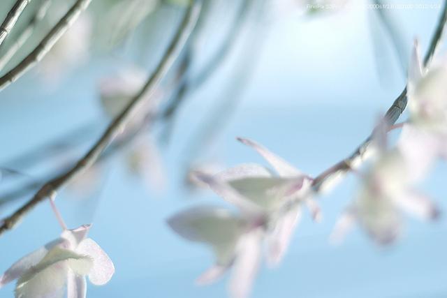 spring   Flickr - Photo Sharing!
