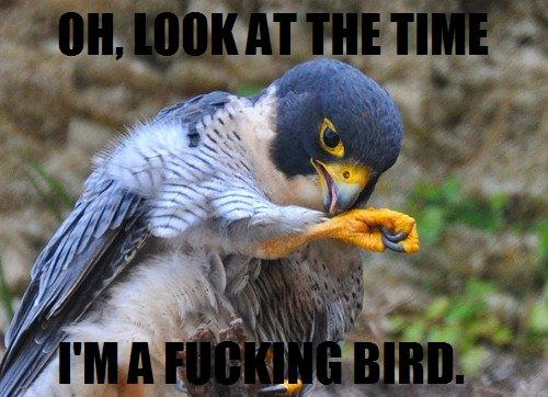 Oh Look At The Time Im A Fucking Bird | WeKnowMemes