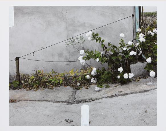 hong-goo-kang-the-house-chrysanthemum-pigment-print-inkacrylic-127x100cm-2010-one-and-j-gallery.jpg (Image JPEG, 583x462 pixels)