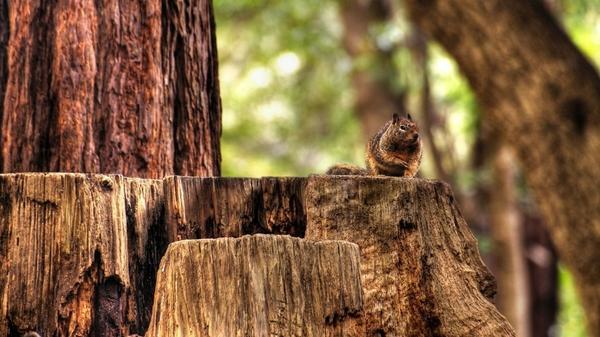 nature,squirrels nature squirrels 1920x1080 wallpaper – Squirrels Wallpaper – Free Desktop Wallpaper