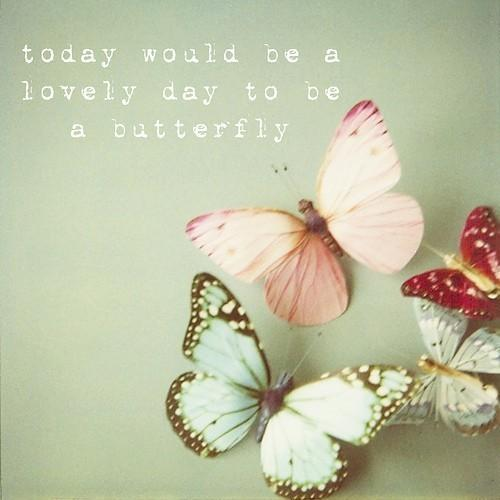 Cute Things / butterflies