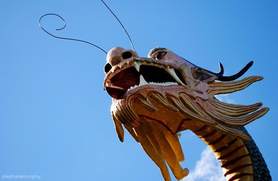 dragon - 2010 by ~stephmurphz