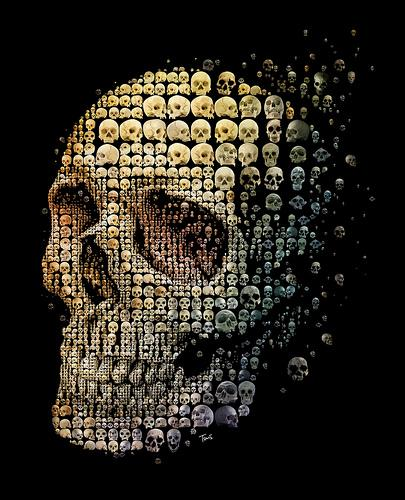Skull evolution (for Discover magazine) / Charis Tsevis picture on VisualizeUs
