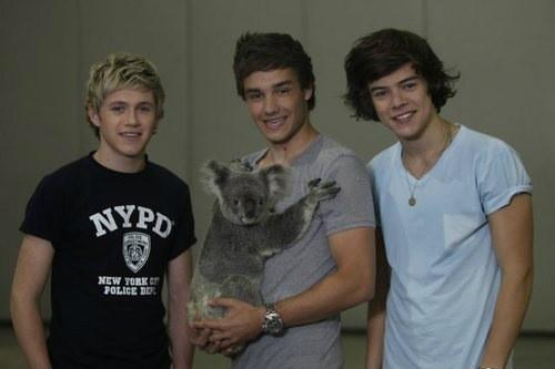 lilynguyen__ : RT @1DUpdatesAU: Niall Liam and Harry with a koala http://t.co/3fMQCN2e | Twicsy, the Twitter Pics Engine