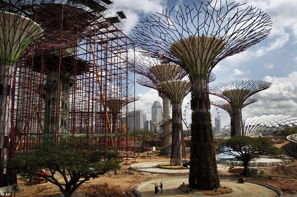 Singapore Supertrees: 50-metre manmade trees installed in the middle of the city | Mail Online