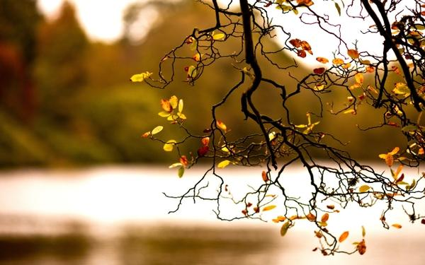 nature,autumn nature autumn 2560x1600 wallpaper – Autumn Wallpaper – Free Desktop Wallpaper