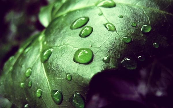 leaves,water drops leaves water drops macro 2560x1600 wallpaper – Macro Wallpaper – Free Desktop Wallpaper