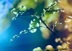 leaves,water drops leaves water drops macro 2560x1600 wallpaper – Macro Wallpaper – Free Desktop Wallpaper