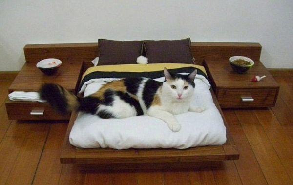 A Luxury Platform Bed for Cats Would Cost you $1,600