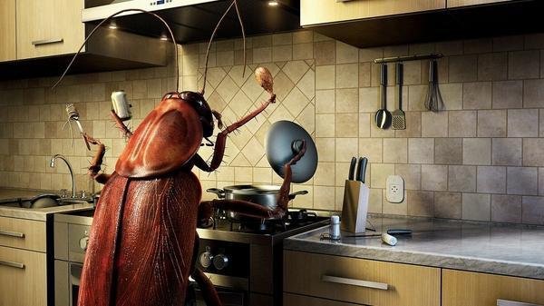 humor,Bug humor bug cooking photomanipulation 1920x1080 wallpaper – Bugs Wallpaper – Free Desktop Wallpaper