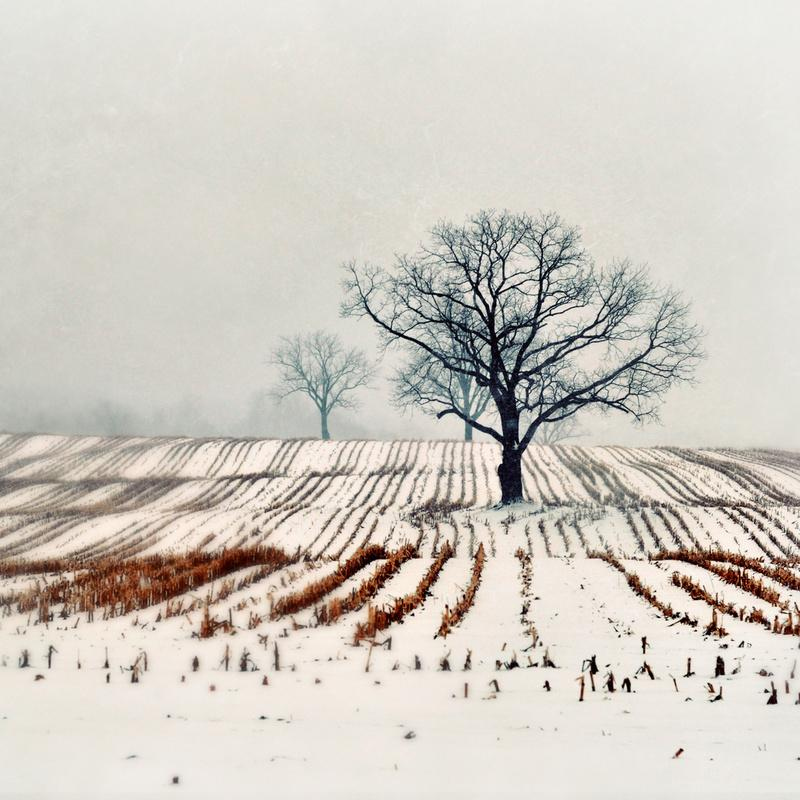 Winter Farm Stretched Canvas by Elle Moss | Society6