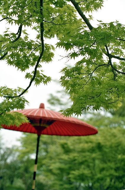 in the garden   Flickr - Photo Sharing!
