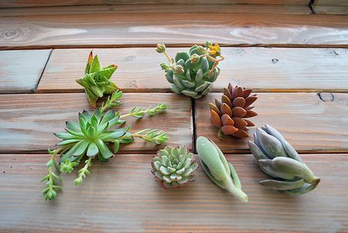 Light Grey Art Lab: Succulent Terrariums Class - Mini Worlds!