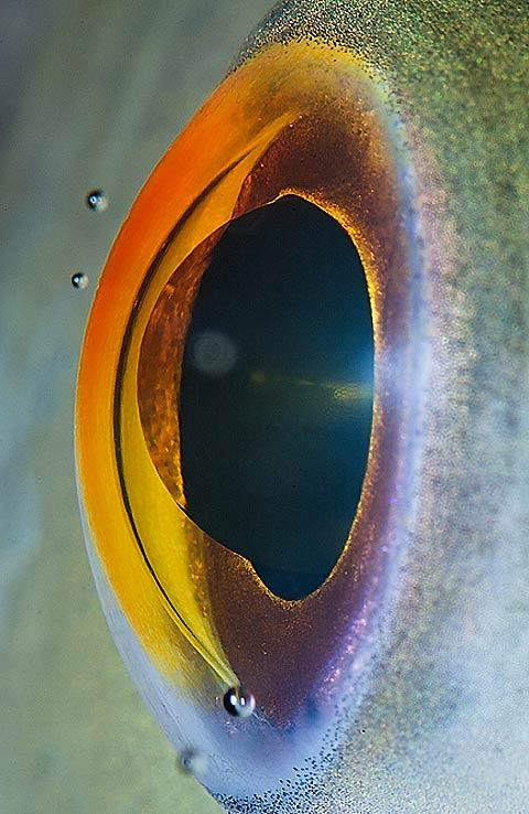 Stunning macro-photography of animal eyes — Lost At E Minor: For creative people