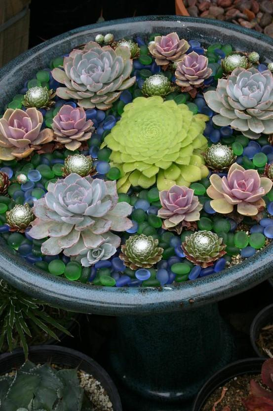 Small Garden Ideas / Succulent Container Garden, looks like floating in water