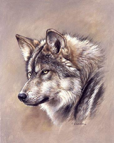 1017_mexicangraywolf.JPG (366×458)