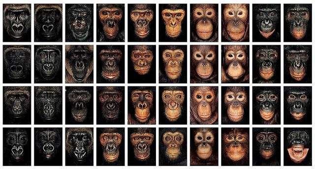 James & Other Apes, by James Mollison | Flickr - Photo Sharing!