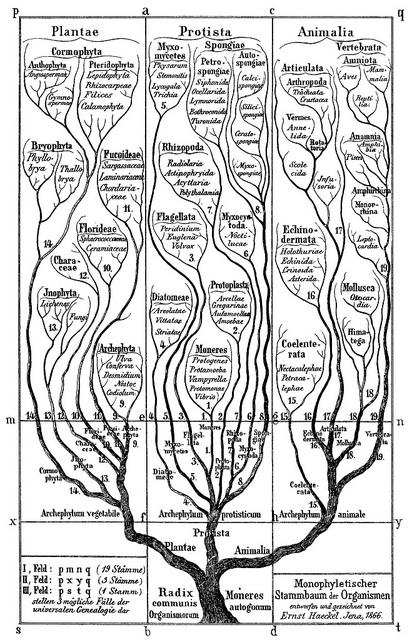 Haeckel's Tree of Life | Flickr - Photo Sharing!