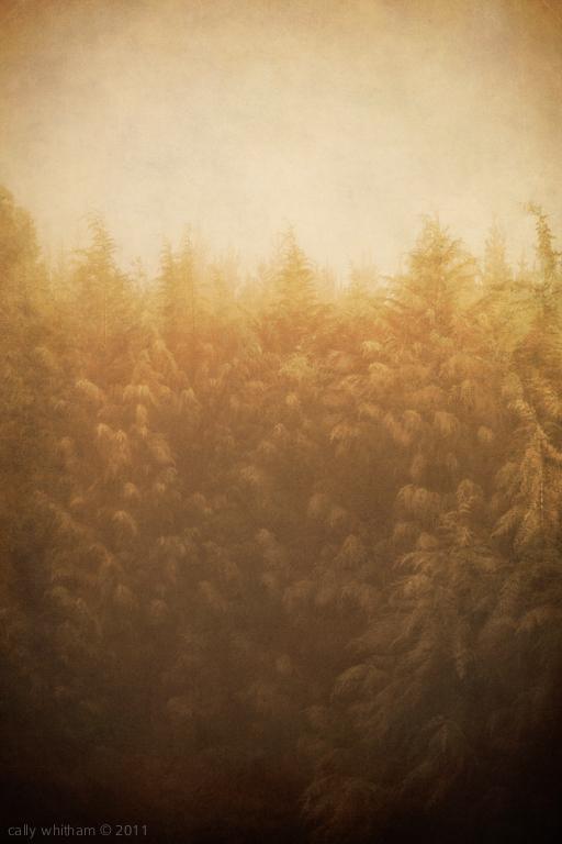 A Memoir of Trees