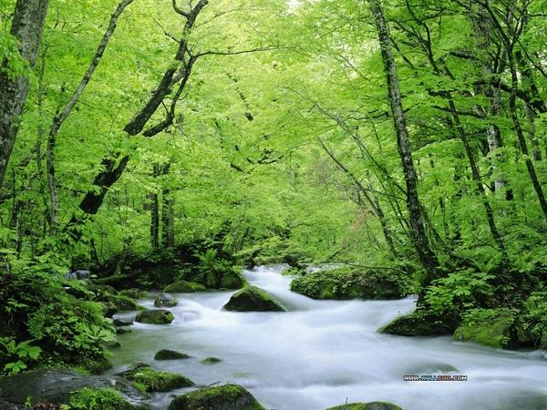 water,green green water nature forest summer 1024x768 wallpaper – Summer Wallpaper – Free Desktop Wallpaper