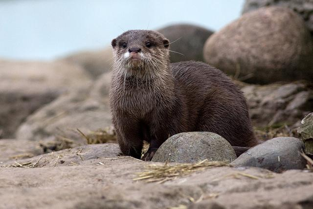 Otter | Flickr - Photo Sharing!