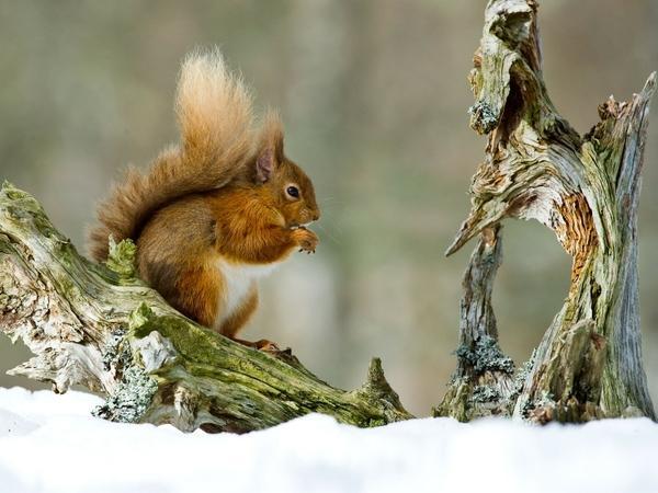 nature,animals nature animals photography squirrels 1600x1200 wallpaper – Squirrels Wallpaper – Free Desktop Wallpaper