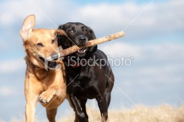 I got it first | Stock Photo | iStock