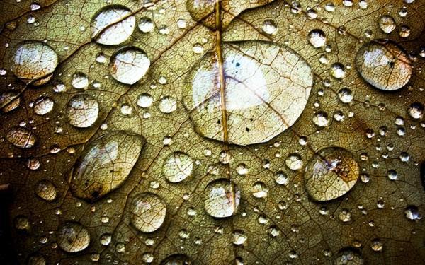 water,leaves water leaves drops macro 2560x1600 wallpaper – Macro Wallpaper – Free Desktop Wallpaper