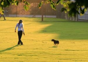 Dog Parks in London Step by Step List, How to Guide