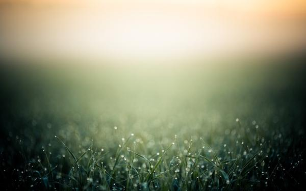 sunsets,grass sunsets grass water drops macro morning 2560x1600 wallpaper – Macro Wallpaper – Free Desktop Wallpaper