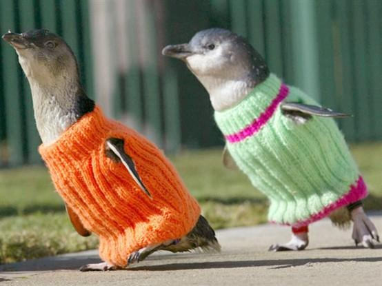 Fur and Feathers / knit a penguin a sweater to keep it warm