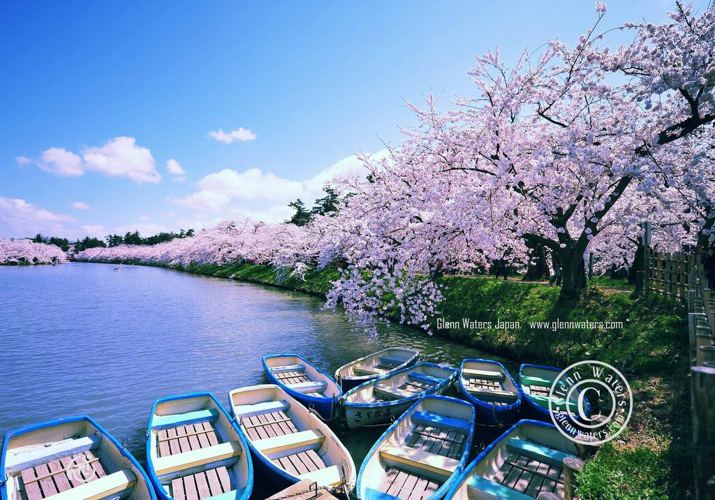 All sizes | Hirosaki Moat in Spring. 1,000 visits to this image. Thank you. | Flickr - Photo Sharing!