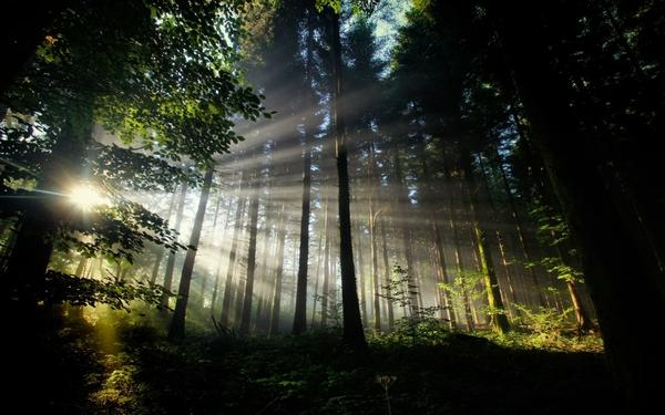trees,forest trees forest sunbeams 1920x1200 wallpaper – Trees Wallpaper – Free Desktop Wallpaper