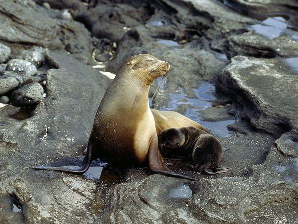 Seal Pictures - Sea Lion Wallpapers - National Geographic