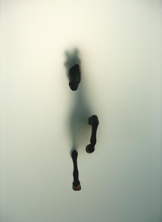 Saatchi Online Artiste: Miriam Sweeney; Giclée, 2009, Photographie