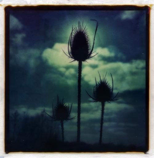 1,2,3 soleil... - Polaroid de m6