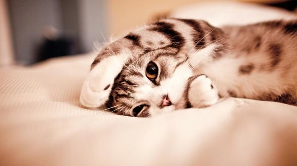 cats cats 1920x1080 wallpaper – Cats Wallpaper – Free Desktop Wallpaper