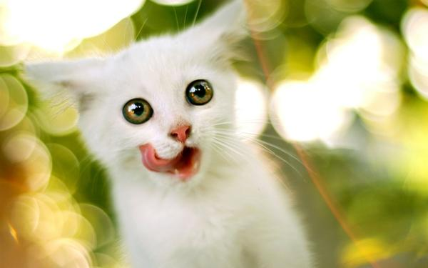 animals,cats cats animals tongue kittens 1920x1200 wallpaper – Cats Wallpaper – Free Desktop Wallpaper